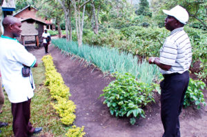an-excellent-kitchen-garden-in-maliba-uganda