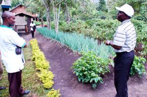 an-excellent-kitchen-garden-in-maliba-uganda